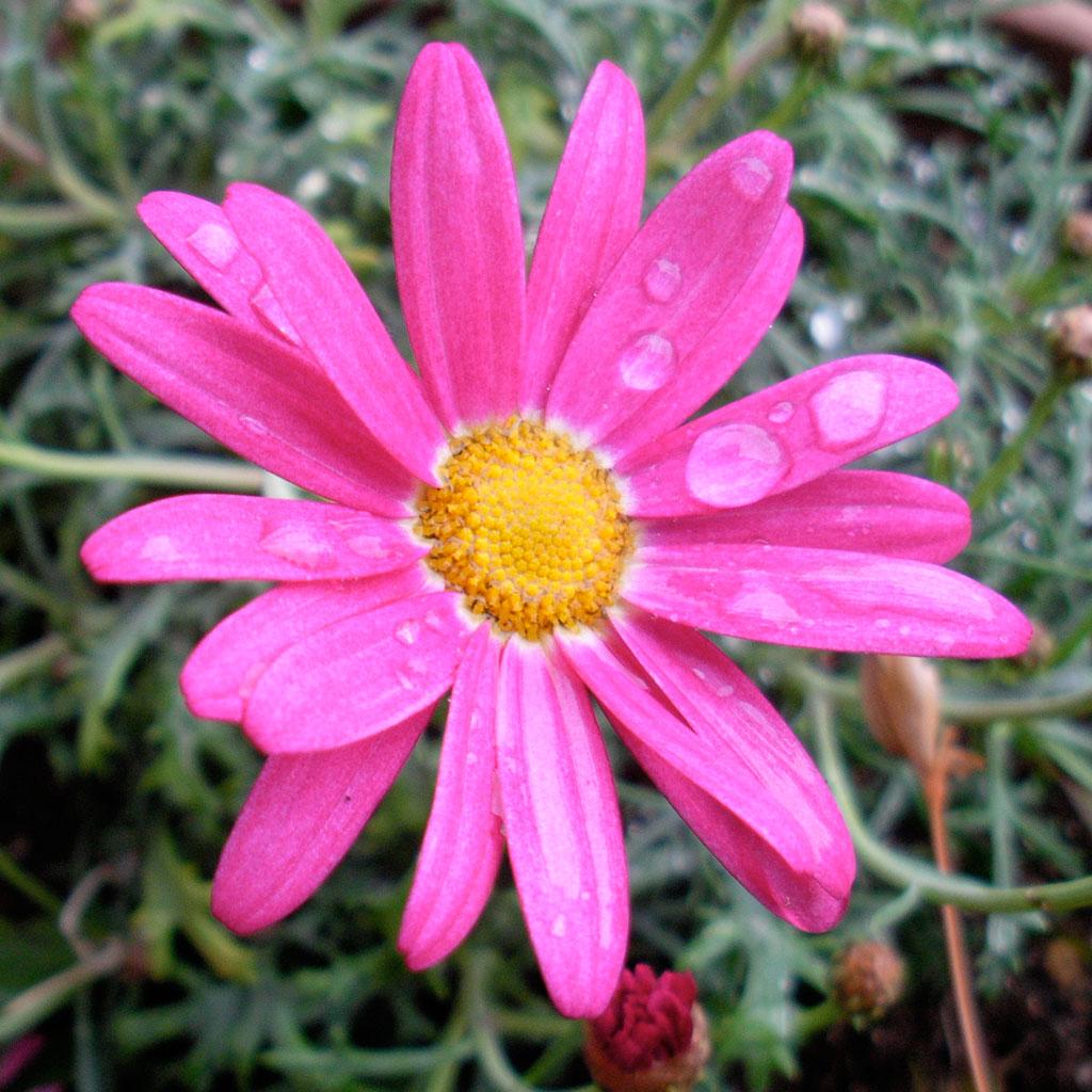 http://www.mediatinker.com/blog/2011/03/22/pinkflower.jpg
