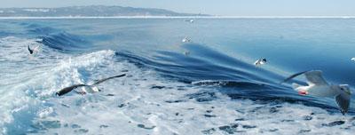 driftice-waves.jpg