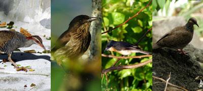 fiji-birds.jpg