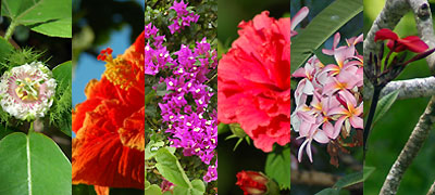 fiji-flowers.jpg