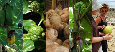 fiji-foods.jpg