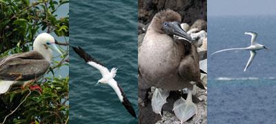 fiji-seabirds.jpg