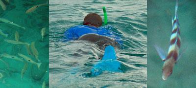 fiji-snorkelling.jpg