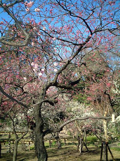korakuen-trees.jpg