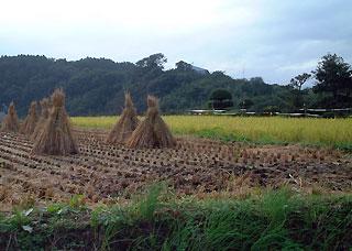 oita-rice1.jpg