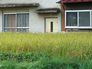 oita-rice2.jpg