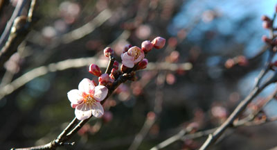 plums-2.jpg