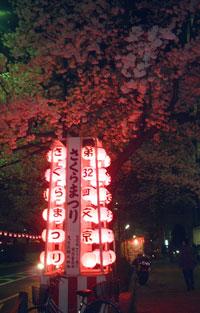 sakura2000.jpg