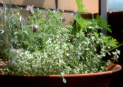 pinhole-herbs.jpg