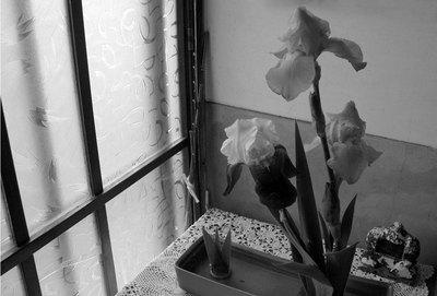 genkan-iris.jpg