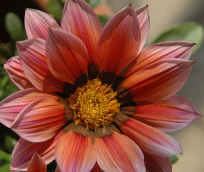 summerflower.jpg