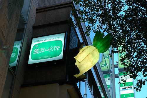 kunitachi-daikon.jpg